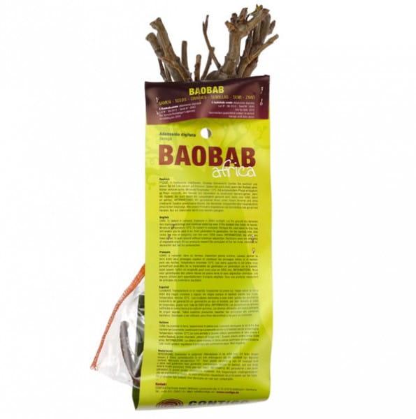 Baobab Setzling Groß - 5-7 Jahre - Zimmerpflanze