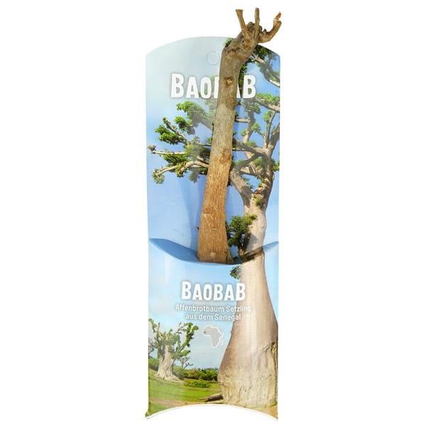 Baobab Setzling Affenbrotbaum Zimmerpflanze Lebensbaum