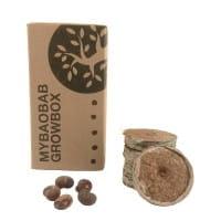 Baobab Samen - Growbox - Zimmerpflanze
