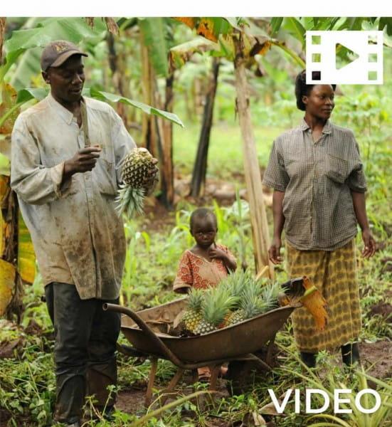 Getrocknete Papaya - Bio - Tansania